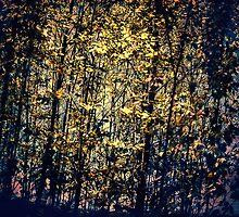 Dark Ambient Forest by MissDawnM