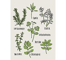 Herb Photographic Print