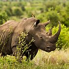 White Rhinoceros by vivsworld