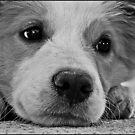 Puppy  by dedakota
