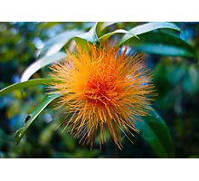 Orange Ohia 2 Photographic Print