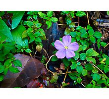 Tropical Flower and Leaf  Photographic Print