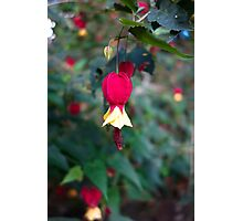 Tropical Fuschia  Photographic Print