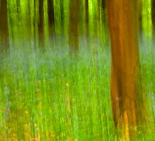 Bluebell Wood in Abstract by Nick Jenkins