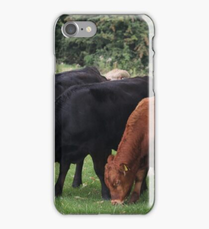 westwood cows iPhone Case/Skin