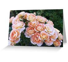 Rose: Summer Dream  Greeting Card