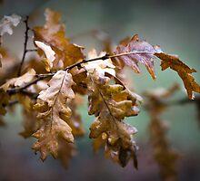 Oak leaves by tamás klausz