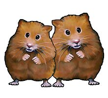 Hamster Couple, Cute Whimsical Art, Two Hamsters Photographic Print