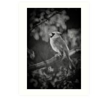 Red Bird In Black And White Art Print