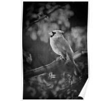 Red Bird In Black And White Poster