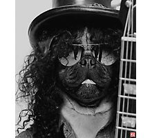 Slash Pug Photographic Print