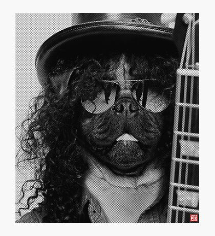 Slash Pug Photographic Print