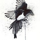 Magpie by lukefielding