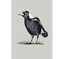Magpie - Dedicated to family Photographic Print