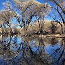 Liquid Forest by Bob Larson