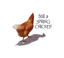 Still a Spring Chicken, Artwork of Walking Hen, Humor by Joyce Geleynse