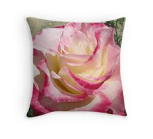 'Double Delight' Rose, Rose Garden, Beaufort, Country Town, Vic. Throw Pillow