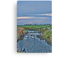Swan Swam Canvas Print