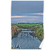 Swan Swam Poster