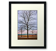 Trees at the Boardwalk in Toronto Framed Print