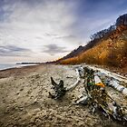 Beach at Scarborough Bluffs by Elena Elisseeva