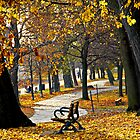 Autumn park in Toronto by Elena Elisseeva