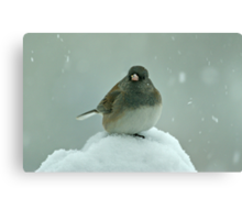 Dark-Eyed Junco in the Snow Canvas Print