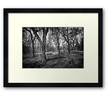 Willows in spring park Framed Print