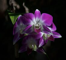 Purple Orchids Front View by Stephen Orsillo