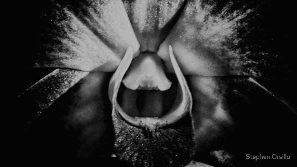 "Black & White Orchid"" by Stephen Orsillo 