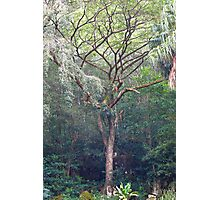 Waimea Tree Study 1  Photographic Print