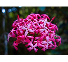Hot Pink Tropical Cluster  Photographic Print
