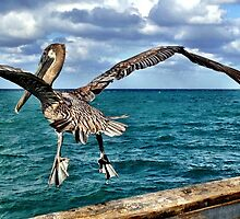Pelican in flight by Ludwig Wagner