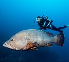 The Dive Guide by Norbert Probst