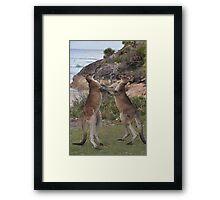 Boxing kangaroos on the beach Framed Print