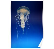 Jellyfish on blue background Poster