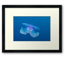 Blue Crown Jellyfish Framed Print