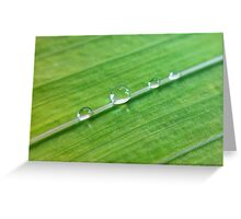 Water Droplets InLine Greeting Card