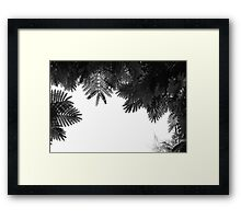 """The Tree Top"" Framed Print"