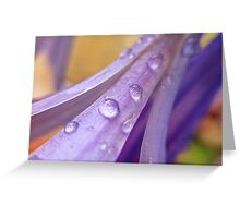 Water Droplets on Purple Flower Greeting Card