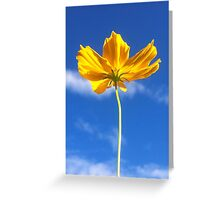 Flower in Blue Sky Greeting Card