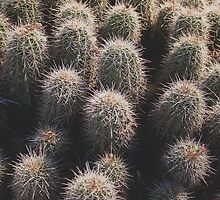 Tiny Cacti by Candy Svoboda