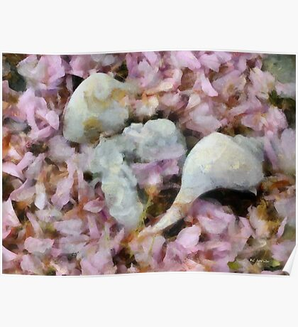 Blossoms and Shells Poster