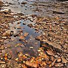 Current River by Dawne Olson