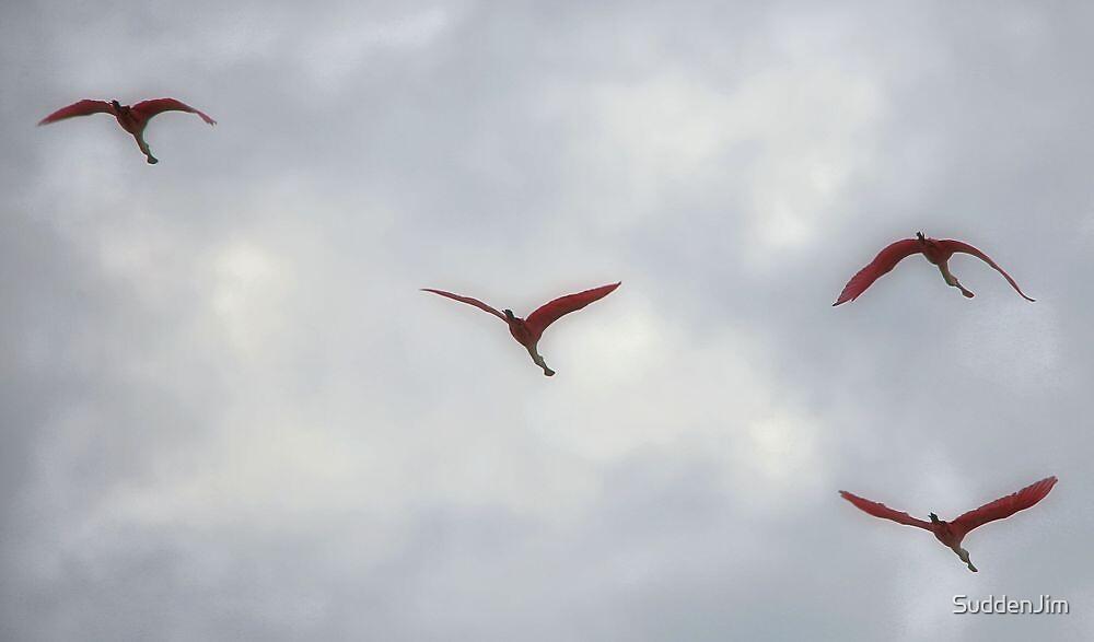 Spoonbills In Flight by SuddenJim