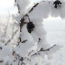 Frosty Berries  by Coleen Gudbranson