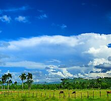 Tropical Landscape, Clouds, Palm trees, Cows by LoungeV