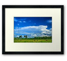 Tropical Landscape, Clouds, Palm trees, Cows Framed Print