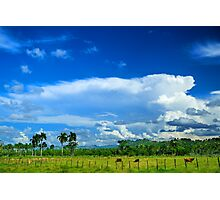 Tropical Landscape, Clouds, Palm trees, Cows Photographic Print