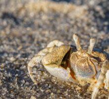 Ghost Crab Sticker